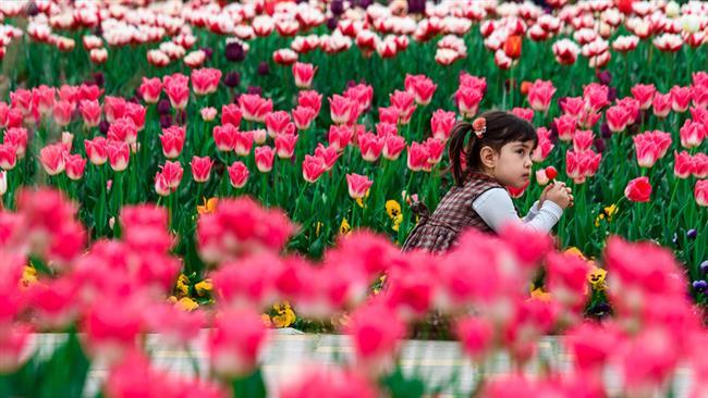 عکسخبر: جشنوارۀ لالههای البرز